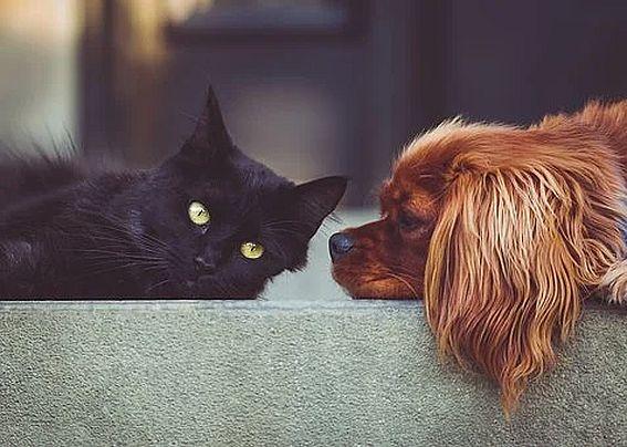 Правительство России поддержало штрафы за ненадлежащее содержание домашних животных