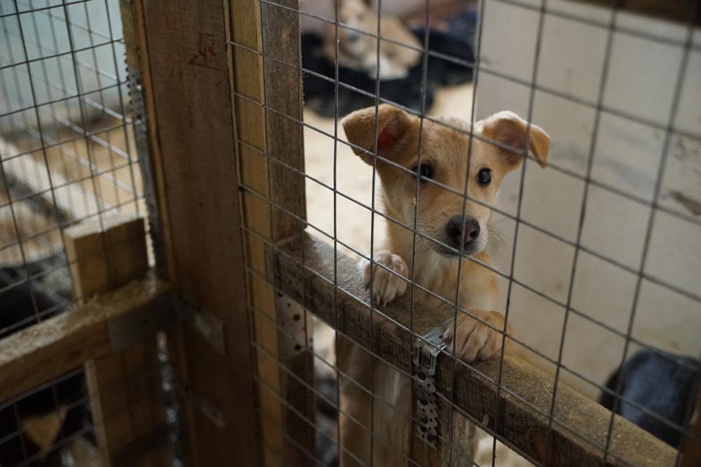 """Бийское ОЗЖ """"Преданность"""" вновь обвинили в жестоком обращении с животными"""
