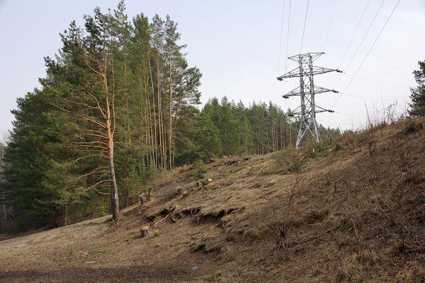 В лес ходить нельзя: введен противопожарный режим