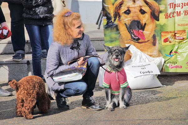 В Алтайском крае будет создана база данных домашних животных