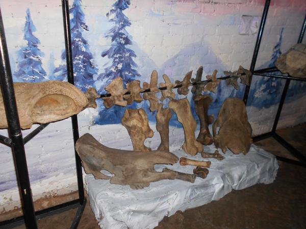 Назад — в ледниковый период: музей Чуйского тракта открыл новую экспозицию