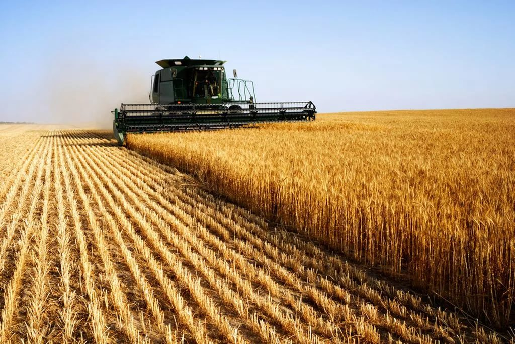 Крупные производители сельхозпродукции заплатят НДС