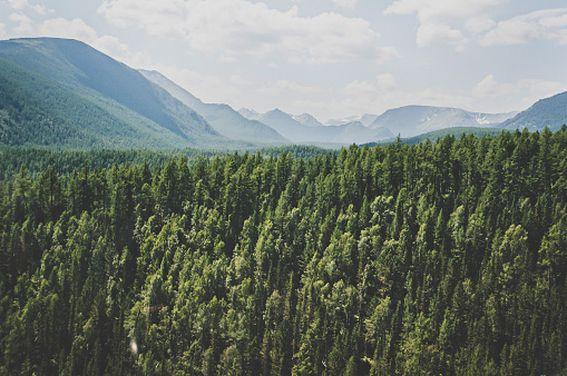 Алтайский край получил более 174 млн рублей на нацпроект «Экология»