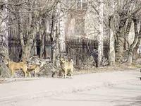 1,5 миллиона рублей на собак