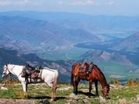 На Алтае хотят вывести специальную породу лошадей для конного туризма