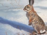 С 11 октября начнется прием заявлений на добычу зайца и лисы
