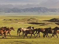 Республика Алтай возглавила тройку самых популярных у туристов направлений