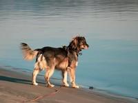 Россиянам запретили брать с собой на пляжи собак
