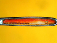 В Бийском краеведческом музее открылась выставка «Диво под микроскопом»