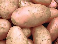 Семенной картофель высшей категории!