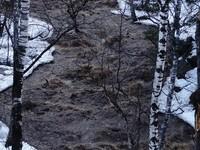 В Белокурихе с гор сошел бурный поток воды и снега