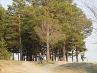 В лесу на АБ завелись дровосеки