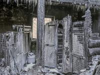 """За месяц после пожара в приюте """"Преданности"""" обществу пожертвовали 1 003 504 рубля"""