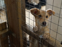 Очередная ярмарка-раздача бездомных животных пройдет 6 мая на бульваре Петра I