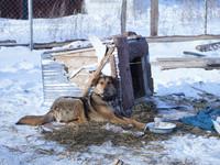 В Бийске выявляют дворы без предупреждающей таблички о собаках