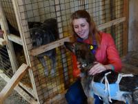 Принят закон о животных, регламентирующий их содержание, выгул и регистрацию