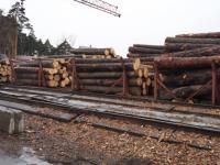 В Бийском районе лесхоз организовал бесплатную раздачу дров