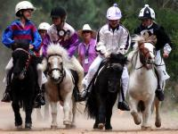 Конно-спортивный праздник приглашает гостей