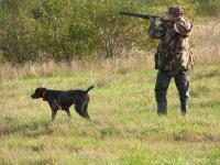 В крае утверждены квоты на добычу охотничьих ресурсов