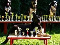 """В Бийске состоятся ежегодные соревнованиях по собаководству """"Бийские старты- 2018"""""""