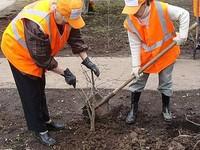 Бийскому управлению ЖКХ посоветовали озеленять не только красные линии, но и дворы микрорайонов