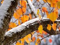 Алтайские синоптики: стабильности погодных условий не стоит ждать до середины июня