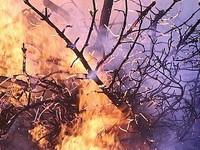 С 28 апреля в Алтайском крае введут особый противопожарный режим