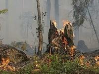«Авиалесоохрана» назвала площадь действующих лесных пожаров в Республике Алтай