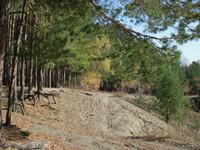 Больной вопрос: решение снять с леса на АБ статус парка вновь не принято