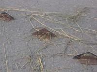 Полицейским удалось задержать вредителей, разбросавших шипы на трассе недалеко от с. Бочкари