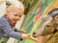 С 1 января 2020 года контактные зоопарки в России будут под запретом