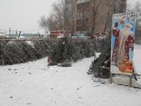 Количество официальных елочных базаров в Бийске сократилось в этом году до семи