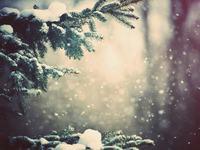 20 января начнется демонтаж новогодней ели на Бульваре Петра Первого