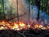 Из-за высокой пожароопасности в крае объявлено штормовое предупреждение