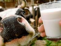 Фермеры наращивают производство птицы и молока