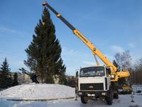 В Бийске установили главную городскую елку