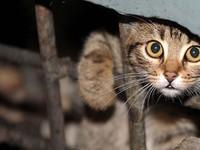 Теплый прием: бездомные кошки вновь смогут законно греться в подвалах жилых домов