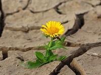 Росгидромет предупредил о грядущей засухе в Алтайском крае