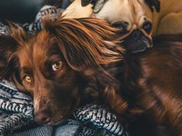 Любителям домашних животных