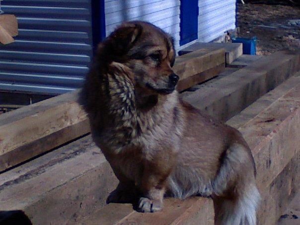 Отлов безнадзорных собак в Бийском районе в данный момент не ведется